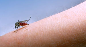Malaria, mosquitoes and how to avoid them